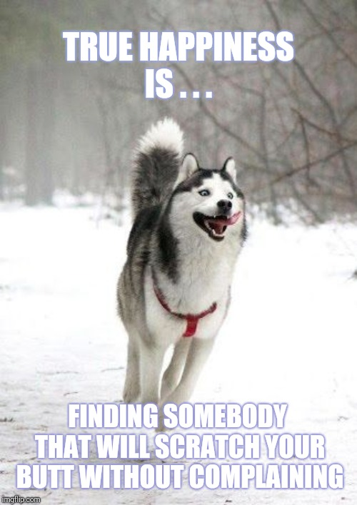 Happiness Is Perspective |  TRUE HAPPINESS IS . . . FINDING SOMEBODY THAT WILL SCRATCH YOUR BUTT WITHOUT COMPLAINING | image tagged in happy husky,scratch,song of my people,lol,too funny,true dat | made w/ Imgflip meme maker