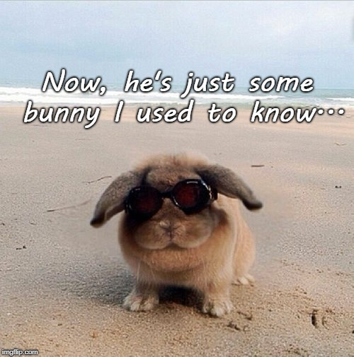 Groan... | Now, he's just some bunny I used to know... | image tagged in now,bunny,used to know | made w/ Imgflip meme maker