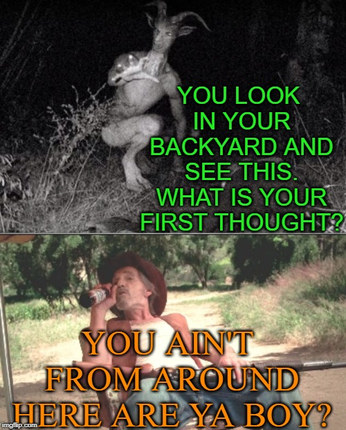 country boys will survive and i was bored lol |  YOU LOOK IN YOUR BACKYARD AND SEE THIS. WHAT IS YOUR FIRST THOUGHT? YOU AIN'T FROM AROUND HERE ARE YA BOY? | image tagged in funny,oh hell no | made w/ Imgflip meme maker