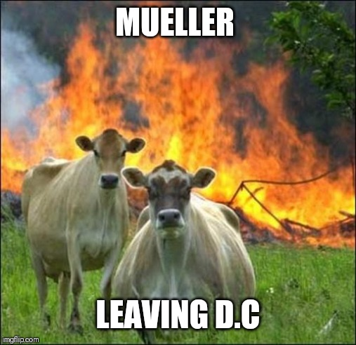 Evil Cows |  MUELLER; LEAVING D.C | image tagged in memes,evil cows | made w/ Imgflip meme maker