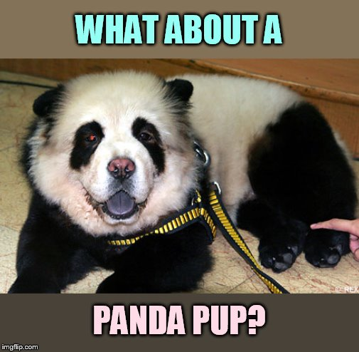 WHAT ABOUT A PANDA PUP? | made w/ Imgflip meme maker