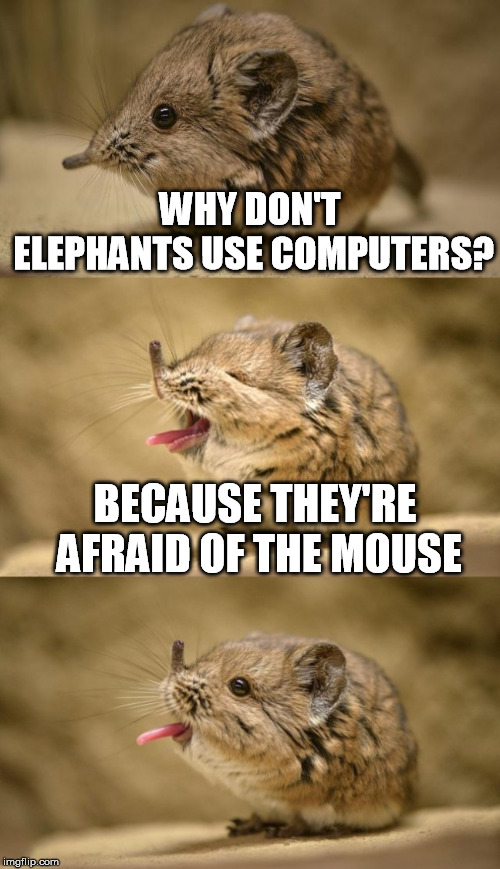 WHY DON'T ELEPHANTS USE COMPUTERS? BECAUSE THEY'RE AFRAID OF THE MOUSE | made w/ Imgflip meme maker