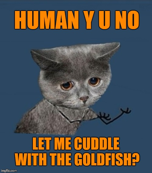 Y u no cat | HUMAN Y U NO LET ME CUDDLE WITH THE GOLDFISH? | image tagged in y u no sad cat,memes,funny,goldfish,cats,44colt | made w/ Imgflip meme maker