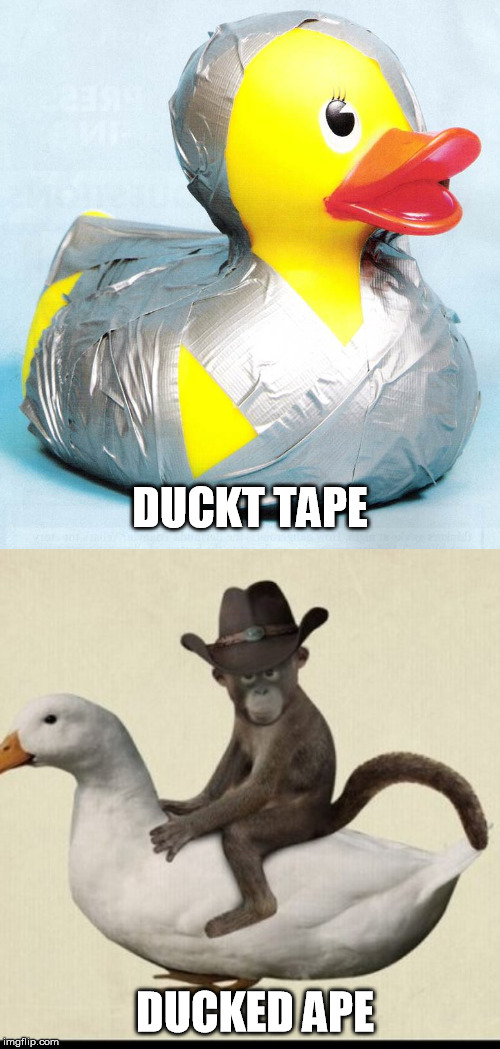 Duck it |  DUCKT TAPE; DUCKED APE | image tagged in memes,duck,duct tape | made w/ Imgflip meme maker