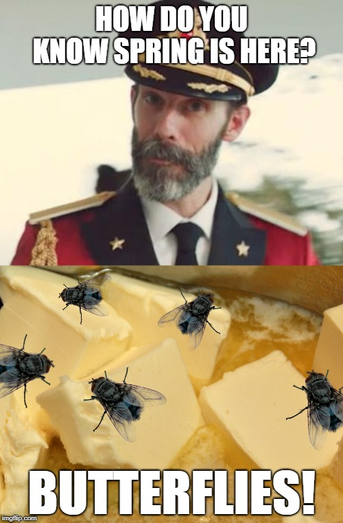 Spring has sprung for better or worse | HOW DO YOU KNOW SPRING IS HERE? BUTTERFLIES! | image tagged in captain obvious,flies,butterflies,spring | made w/ Imgflip meme maker