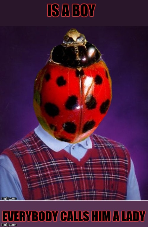 Bad Luck Species | IS A BOY EVERYBODY CALLS HIM A LADY | image tagged in memes,funny,bad luck brian,ladybug,bugs,44colt | made w/ Imgflip meme maker