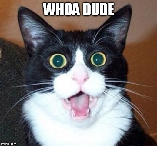 whoa cat | WHOA DUDE | image tagged in whoa cat | made w/ Imgflip meme maker