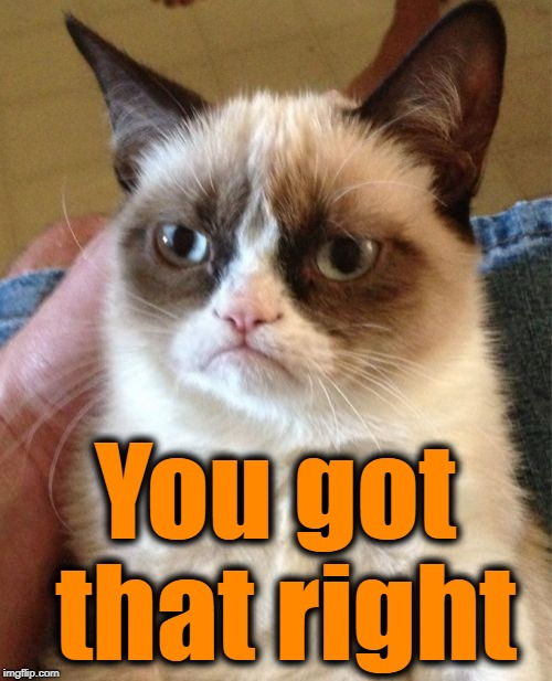 Grumpy Cat Meme | You got that right | image tagged in memes,grumpy cat | made w/ Imgflip meme maker