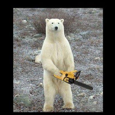 Bear Meme Templates Imgflip