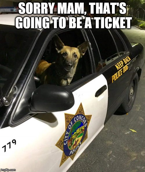 police dog driving | SORRY MAM, THAT'S GOING TO BE A TICKET | image tagged in police dog driving | made w/ Imgflip meme maker