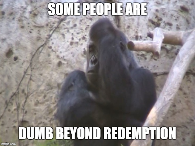 Some people are dumb beyond redemption | SOME PEOPLE ARE DUMB BEYOND REDEMPTION | image tagged in frustrated gorilla,memes,stupid people,dumb,redemption,idiot | made w/ Imgflip meme maker