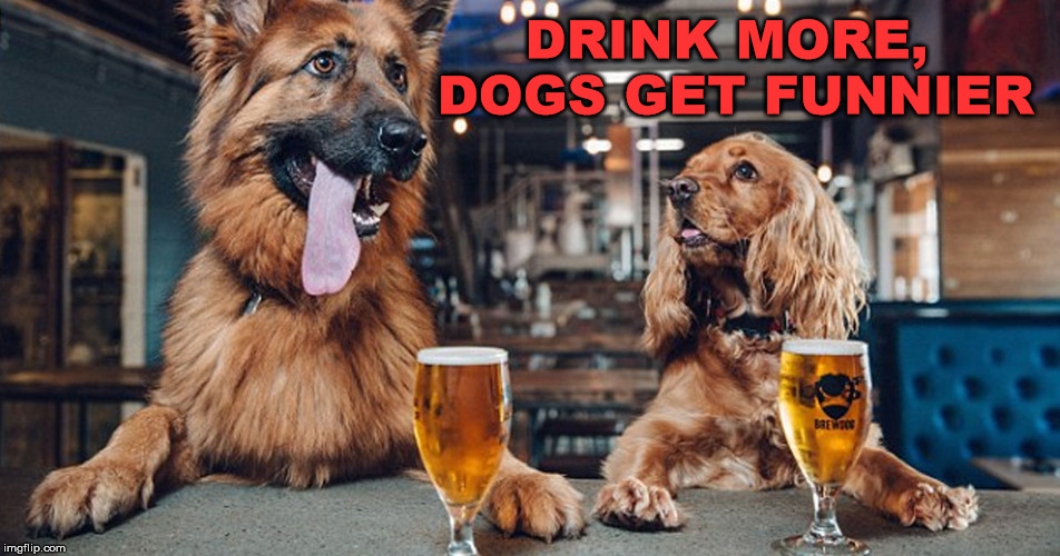 dog drinking | DRINK MORE, DOGS GET FUNNIER | image tagged in dog drinking | made w/ Imgflip meme maker