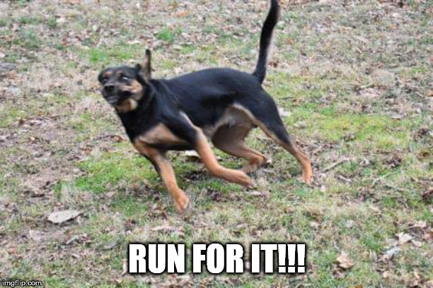 Dog running | RUN FOR IT!!! | image tagged in dog running | made w/ Imgflip meme maker