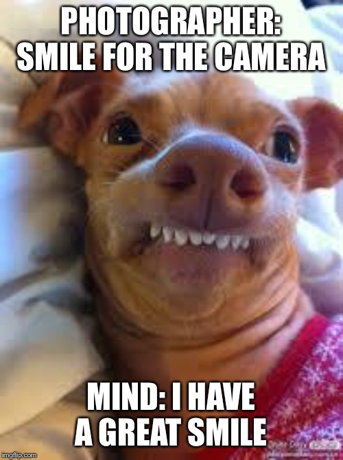 teeth dog | PHOTOGRAPHER: SMILE FOR THE CAMERA MIND: I HAVE A GREAT SMILE | image tagged in teeth dog | made w/ Imgflip meme maker