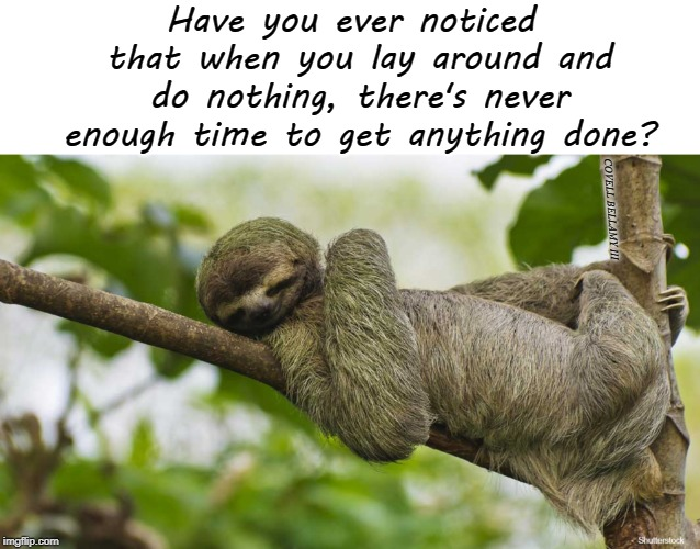 Have you ever noticed that when you lay around and do nothing, there's never enough time to get anything done? COVELL BELLAMY III | image tagged in sloth lay around | made w/ Imgflip meme maker