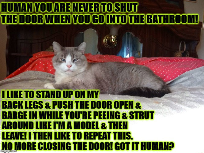 HUMAN YOU ARE NEVER TO SHUT THE DOOR WHEN YOU GO INTO THE BATHROOM! I LIKE TO STAND UP ON MY BACK LEGS & PUSH THE DOOR OPEN & BARGE IN WHILE | image tagged in smug turd | made w/ Imgflip meme maker