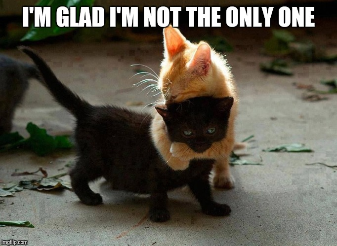 kitten hug | I'M GLAD I'M NOT THE ONLY ONE | image tagged in kitten hug | made w/ Imgflip meme maker