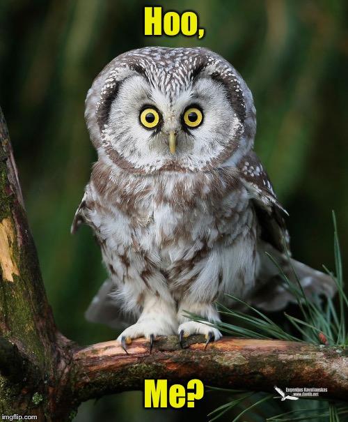 Owl Memes Imgflip