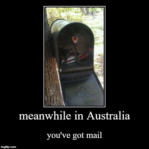 Australia Post | meanwhile in Australia | you've got mail | image tagged in demotivationals,funny memes,memes,lizard,meanwhile in australia,australia | made w/ Imgflip demotivational maker
