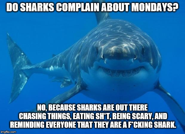 Straight White Shark | DO SHARKS COMPLAIN ABOUT MONDAYS? NO, BECAUSE SHARKS ARE OUT THERE CHASING THINGS, EATING SH*T, BEING SCARY, AND REMINDING EVERYONE THAT THE | image tagged in straight white shark | made w/ Imgflip meme maker