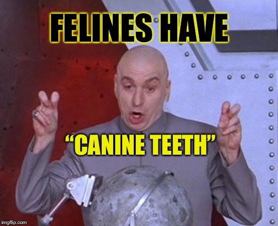 "Catsssss | FELINES HAVE ""CANINE TEETH"" 