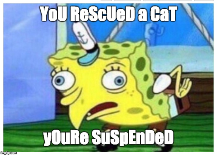 image tagged in verizon,cats,animal rescue | made w/ Imgflip meme maker