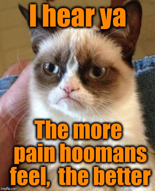 Grumpy Cat Meme | I hear ya The more pain hoomans feel,  the better | image tagged in memes,grumpy cat | made w/ Imgflip meme maker
