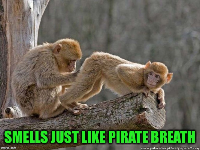 SMELLS JUST LIKE PIRATE BREATH | made w/ Imgflip meme maker