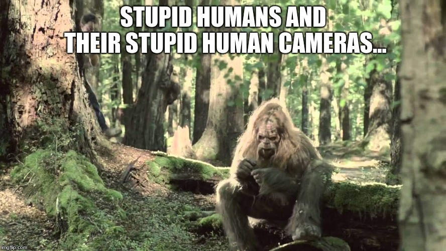 Just Wants To Be Left Alone | STUPID HUMANS AND THEIR STUPID HUMAN CAMERAS... | image tagged in bigfoot,sasquatch,humor | made w/ Imgflip meme maker