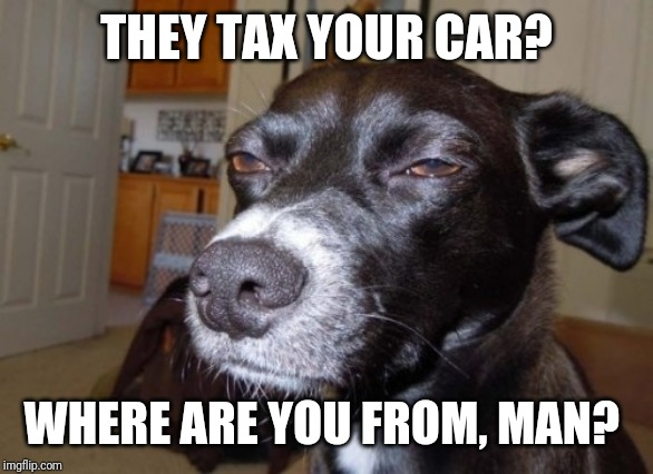 Suspicious dog | THEY TAX YOUR CAR? WHERE ARE YOU FROM, MAN? | image tagged in suspicious dog | made w/ Imgflip meme maker