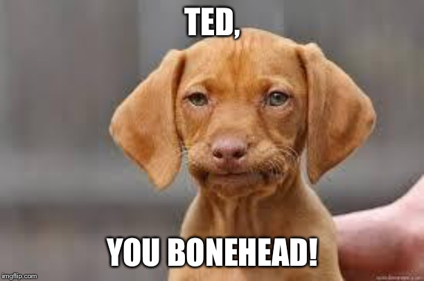 TED, YOU BONEHEAD! | image tagged in disappointed dog | made w/ Imgflip meme maker
