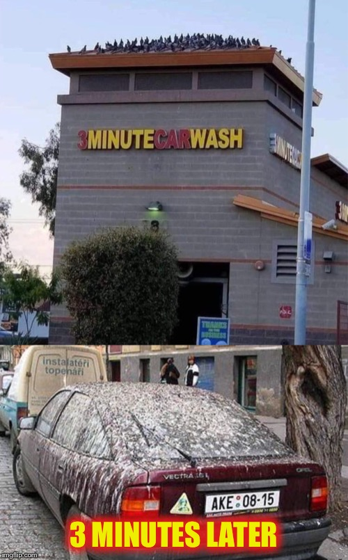 Thanks, but I'll take it somewhere else |  3 MINUTES LATER | image tagged in angry birds,bird shit,car wash,funny | made w/ Imgflip meme maker