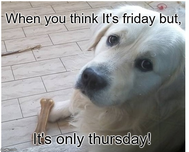 My dog Leon! | When you think It's friday but, It's only thursday! | image tagged in dog,weekdays | made w/ Imgflip meme maker