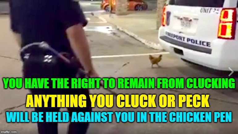 YOU HAVE THE RIGHT TO REMAIN FROM CLUCKING ANYTHING YOU CLUCK OR PECK WILL BE HELD AGAINST YOU IN THE CHICKEN PEN | made w/ Imgflip meme maker