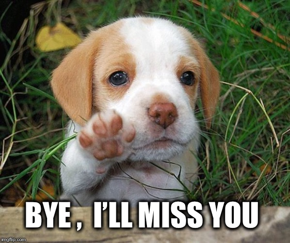 dog puppy bye | BYE ,  I'LL MISS YOU | image tagged in dog puppy bye | made w/ Imgflip meme maker
