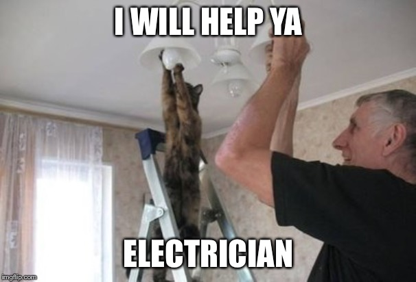 Memes, Cats, Cat changing light bulb | I WILL HELP YA ELECTRICIAN | image tagged in memes cats cat changing light bulb | made w/ Imgflip meme maker