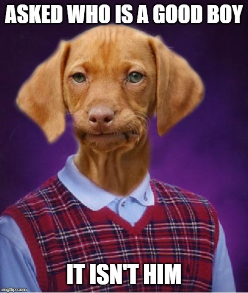 Poor doggie | ASKED WHO IS A GOOD BOY IT ISN'T HIM | image tagged in bad luck raydog,bad luck brian,dog | made w/ Imgflip meme maker