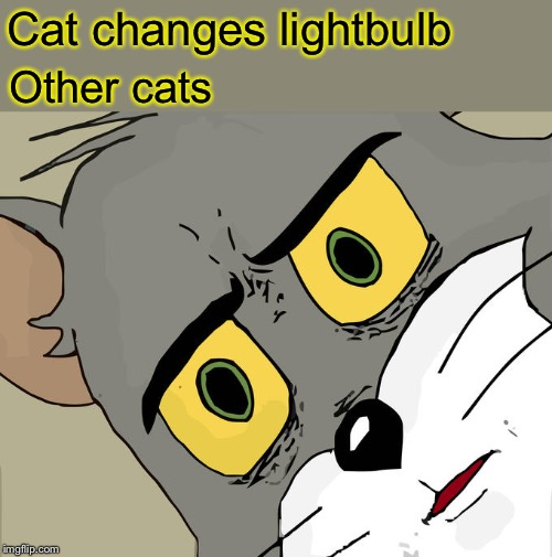 Unsettled Tom Meme | Cat changes lightbulb Other cats | image tagged in memes,unsettled tom | made w/ Imgflip meme maker