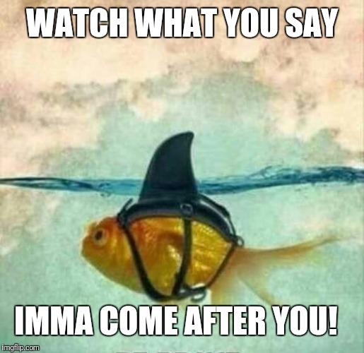 Goldfish Shark | WATCH WHAT YOU SAY IMMA COME AFTER YOU! | image tagged in goldfish shark | made w/ Imgflip meme maker