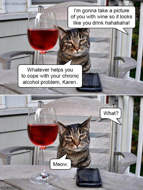 Great insight from a cat. | image tagged in meme,funny cat,drinking,hilarious | made w/ Imgflip meme maker