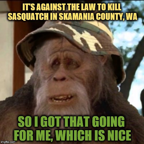 Ludicrous Laws week April 1-7th a LordCheesus, Katechuks and SydneyB event | IT'S AGAINST THE LAW TO KILL SASQUATCH IN SKAMANIA COUNTY, WA SO I GOT THAT GOING FOR ME, WHICH IS NICE | image tagged in bigfoot,so i got that goin for me which is nice,sasquatch,ludicrous laws week | made w/ Imgflip meme maker
