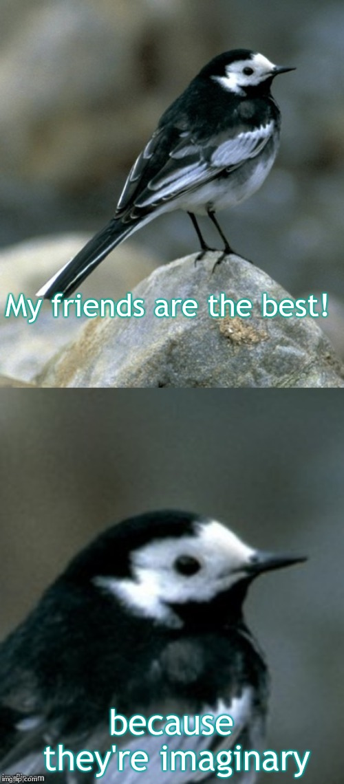 Clinically Depressed Pied Wagtail | My friends are the best! because they're imaginary | image tagged in clinically depressed pied wagtail | made w/ Imgflip meme maker