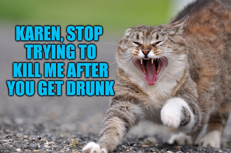 pissed cat | KAREN, STOP TRYING TO KILL ME AFTER YOU GET DRUNK | image tagged in pissed cat | made w/ Imgflip meme maker