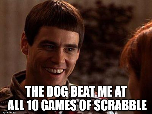 Dumb And Dumber | THE DOG BEAT ME AT ALL 10 GAMES OF SCRABBLE | image tagged in dumb and dumber | made w/ Imgflip meme maker