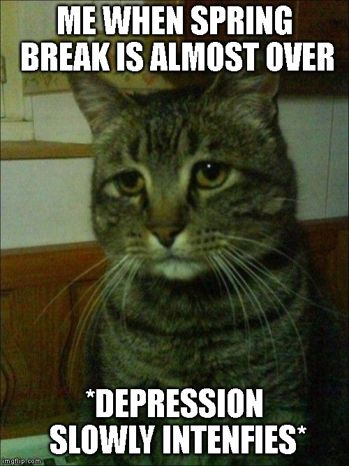 I just want to stay home and make sans memes |  ME WHEN SPRING BREAK IS ALMOST OVER; *DEPRESSION SLOWLY INTENFIES* | image tagged in memes,depressed cat,school,spring break | made w/ Imgflip meme maker