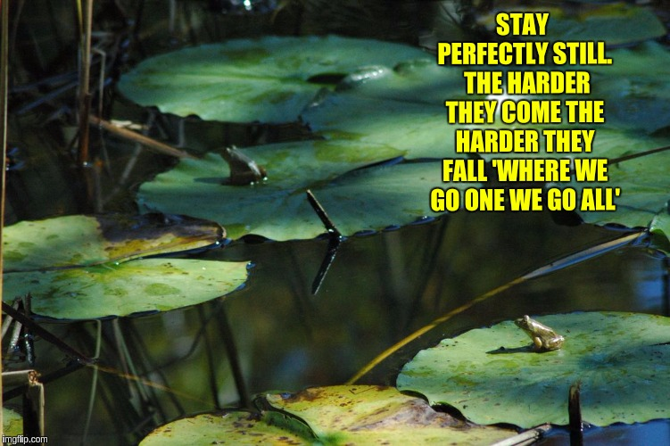 #TheGreatAwakening | STAY PERFECTLY STILL.  THE HARDER THEY COME THE HARDER THEY FALL 'WHERE WE GO ONE WE GO ALL' | image tagged in the great awakening,flotus,potus,qanon | made w/ Imgflip meme maker