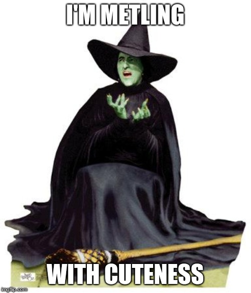 Wizard of Oz Melting | I'M METLING WITH CUTENESS | image tagged in wizard of oz melting | made w/ Imgflip meme maker