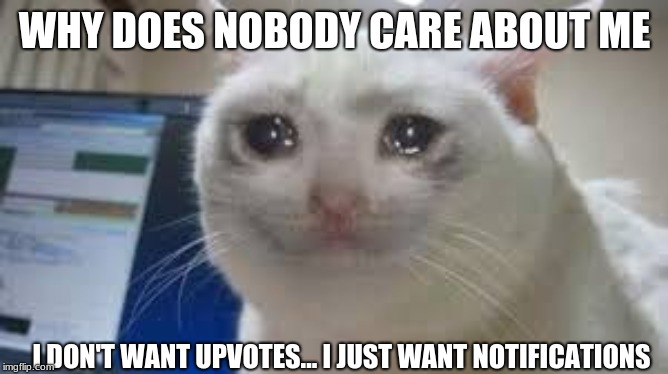 This meme was not intended for upvotes... but is intended for friends/notifications. | WHY DOES NOBODY CARE ABOUT ME I DON'T WANT UPVOTES... I JUST WANT NOTIFICATIONS | image tagged in cats,sad,sad cat,no upvotes | made w/ Imgflip meme maker