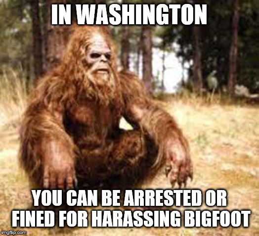 lordcheese and stdney's crazy laws week | IN WASHINGTON YOU CAN BE ARRESTED OR FINED FOR HARASSING BIGFOOT | image tagged in bigfoot,crazy laws,still on the books,leave bigfoot alone | made w/ Imgflip meme maker