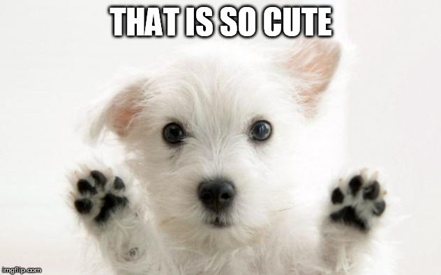 cute dog | THAT IS SO CUTE | image tagged in cute dog | made w/ Imgflip meme maker